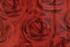 Роза-алая